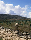 Stone boundary marker by field of cabbages, near Hebron, Israel