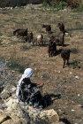 Israel, Bedouin woman with her goat herd near Hebron