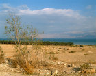 Israel, banana plantations on the Dead Sea with the Hills of Moab beyond