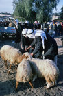 Israel, Beersheva, animal market, Bedouin selling sheep