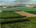 Israel, aerial view of fruit plantations south of Galilee