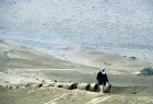 Israel, Negev, Bedouin shepherd with his sheep coming up to the water hole in the Negev