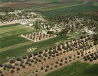 Israel, aerial view of cultivated fields in Jezereel Valley, olive groves