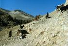 Israel, goats on hillside in Wadi Qilt