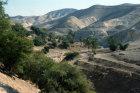 Israel, oasis in Wadi Qilt