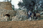 Israel,Samaria, watch tower and Arab farmer in Samaria