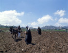 Israel, Arabs ploughing and planting, Bethlehem in the distance on the  hill