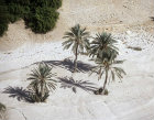 Group of palm trees, aerial, Wadi Qilt, Judean hills, Israel