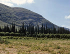Israel, view across a citrus fruit orchard to the Gilboa Range