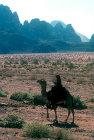 Man on a camel, Wadi Rum, Jordan