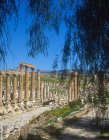 Cardo, north-south oriented Roman street, Jerash,  Jordan