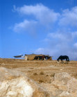 Makeshift Bedouin tent near Madaba, Jordan