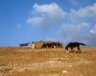 Bedouin tent and horse near Madaba, Jordan