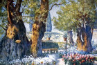 Olive trees in Garden of Gethsemane, Jerusalem, old postcard, at that time Palestine, now Israel