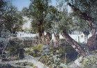 Olive trees in the Garden of Gethsemane, old postcard, Jerusalem, Palestine