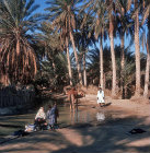 Oasis at Nefta with palm trees, pool and camel, Tunisia