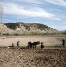 Woman planting potatoes, plough following to turn soil over to cover them, between Lake Egridir and Yalvac, Pisidia, Turkey