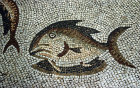 Turkey, Anazarbus, fish from the Thetis mosaic