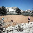 Harvesting near Macan, Cappadocia, Turkey