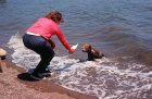 Turkey, Marmaris, bear cub coming out of the sea for a bottle of milk