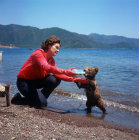 Turkey, Marmaris, bear cub with milk bottle after playing in the sea