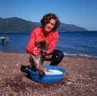 Turkey, Marmaris, bear cub being bathed on the beach to remove salt after swimming