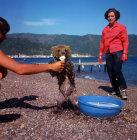Turkey, Marmaris, bear eating ice cream on the beach