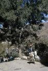 Man on donkey, Jibla, Yemen