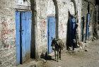Donkey and man, Jibla, Yemen