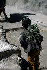 Child carrying vegetables, Jibla, Yemen