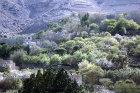 Houses and almond blossom, Hadda, near Sana