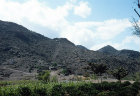 Coffee growing, Yemen